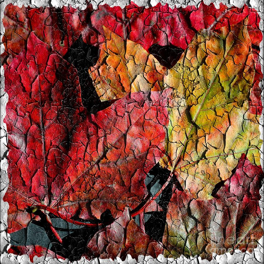 Barbara Griffin Photograph - Maple Leaves Cracked Square by Barbara Griffin