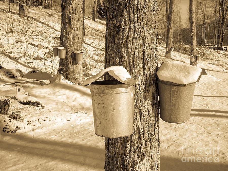 Vermont Photograph - Maple Sap Buckets by Edward Fielding