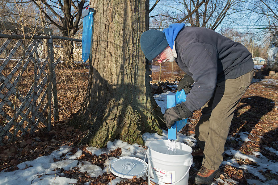 Syrup Photograph - Maple Syrup Production by Jim West