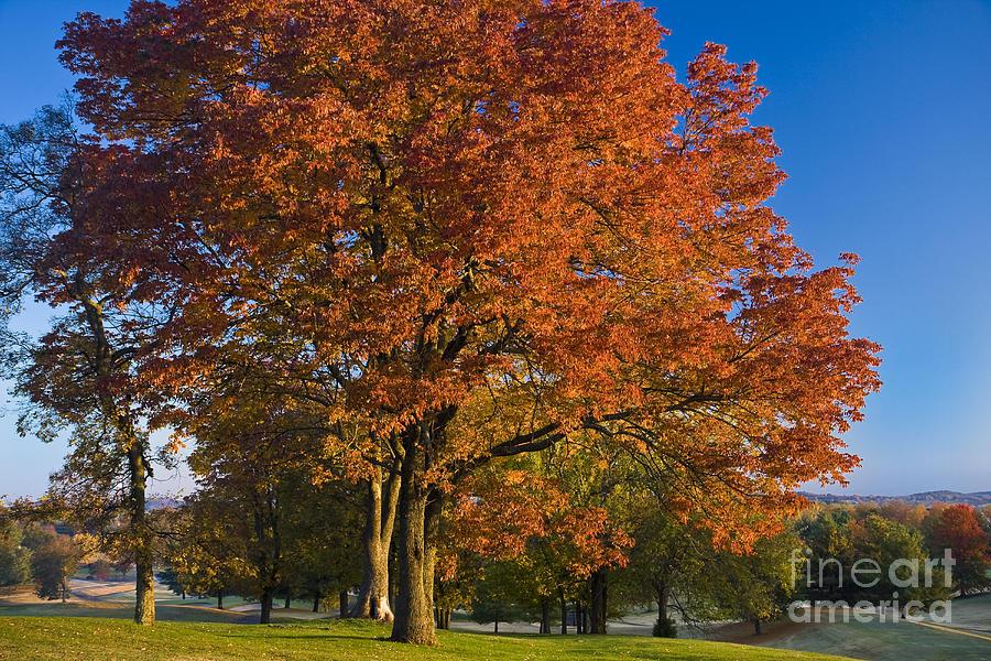 Autumn Photograph - Maple Trees by Brian Jannsen
