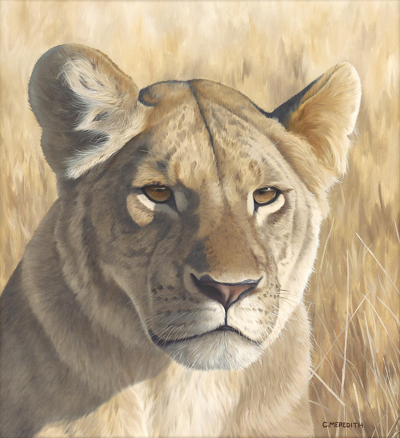 Lion Painting - Mara Lioness by Clive Meredith