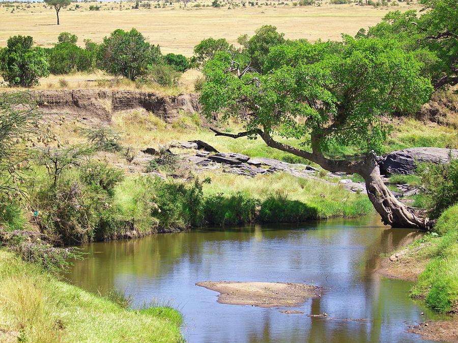 Mara River Photograph by Davorlovincic