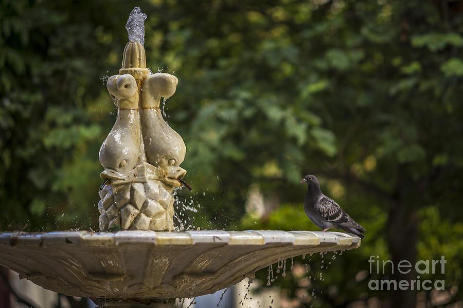Marble Fountain In Plaza De La Candelaria Cadiz Spain Photograph