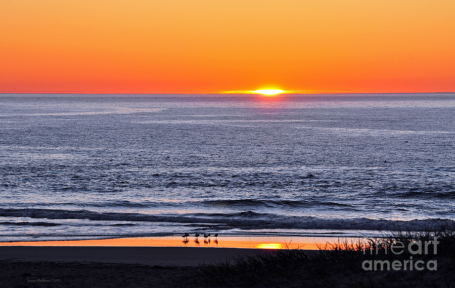 Susan Wiedmann Photograph - Marbled Godwits Reflecting A Sunset by Susan Wiedmann