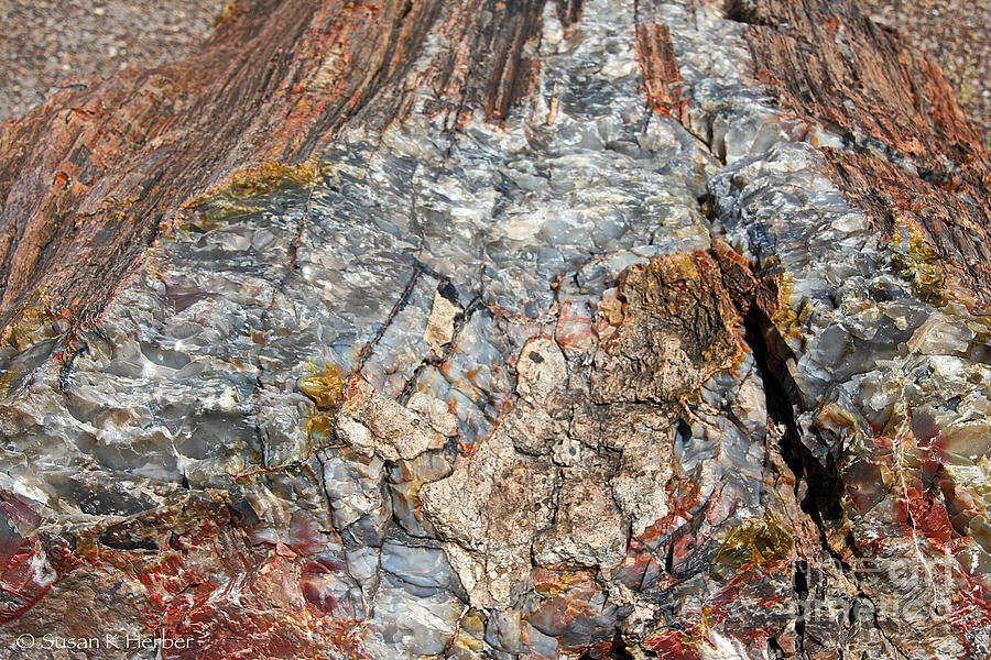 Outdoors Photograph - Marbleized Wood by Susan Herber