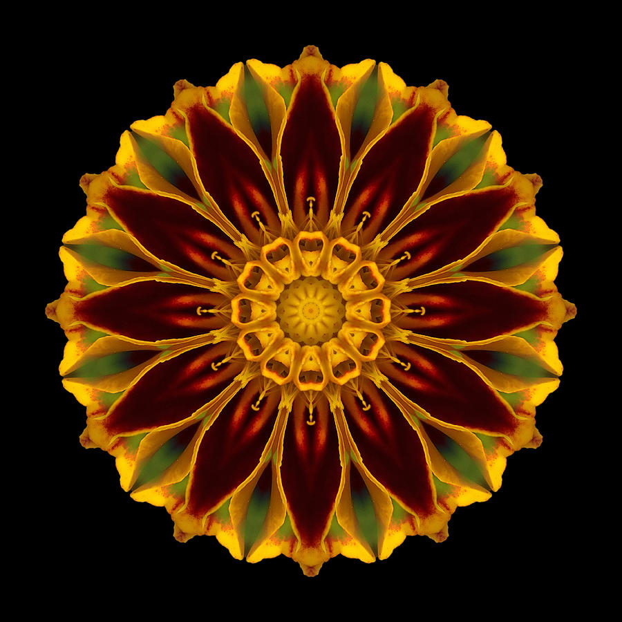 Marigold Flower Mandala Photograph By David J Bookbinder