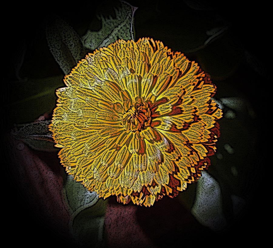 Marigold Digitized by Louise Mingua