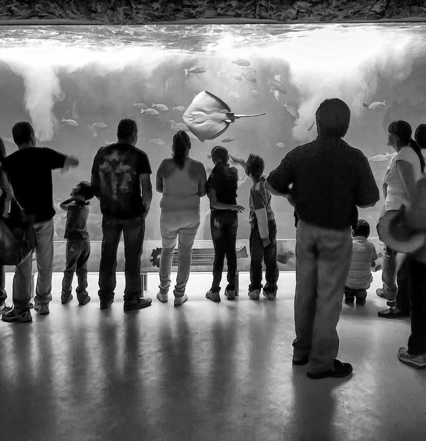Aquarium Photograph - Marine Spectators by Lynn Palmer