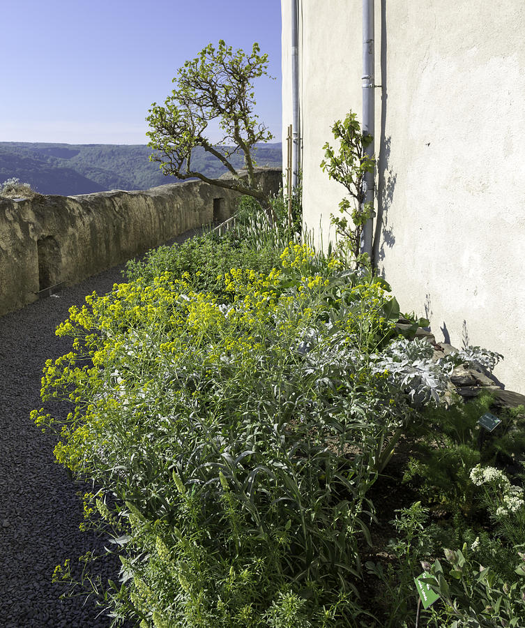 Marksburg Castle Herb Garden 04 Photograph
