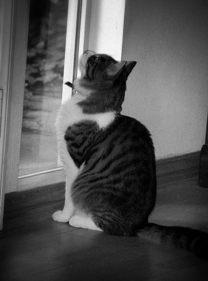 Cat Photograph - Marley by Kelli Donovan