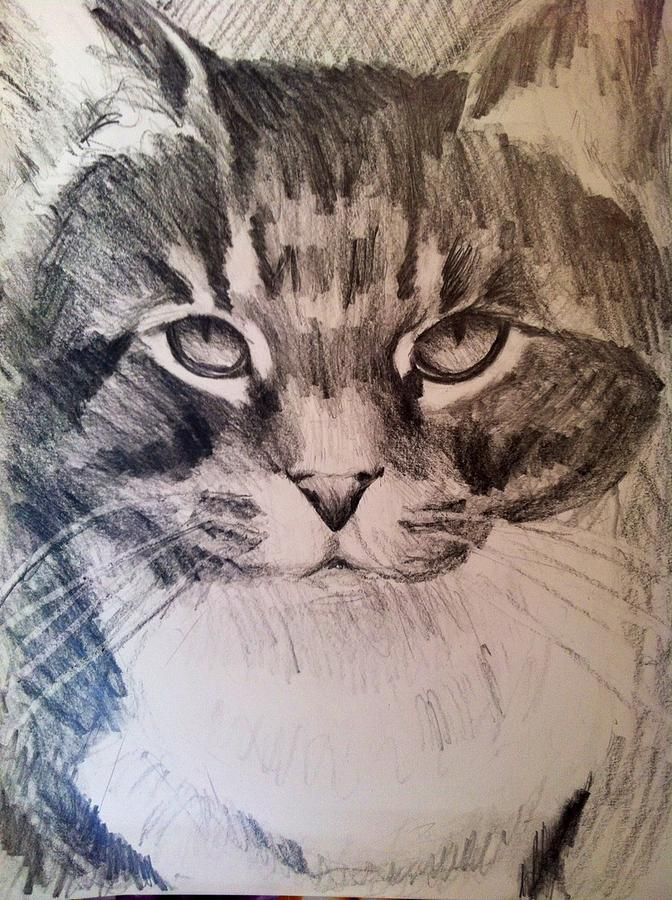 Cat Drawing - Marley Memorial Graphite by Thom Duffy