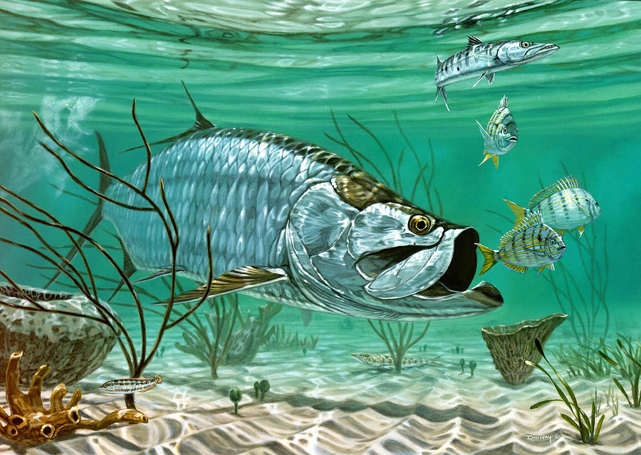 marquesas keys tarpon painting by don ray