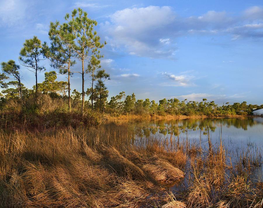 Marsh And Trees Saint George Isl Florida Photograph by Tim Fitzharris