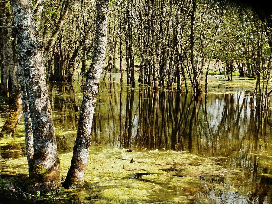 Marsh Photograph - Marsh At Cheadle Lake by VLee Watson