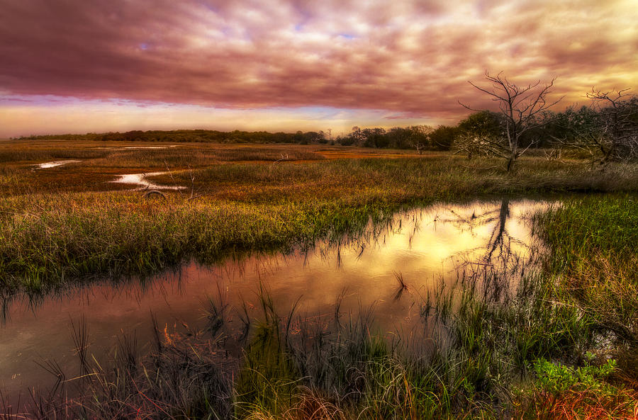 Clouds Photograph - Marsh At Dawn by Debra and Dave Vanderlaan