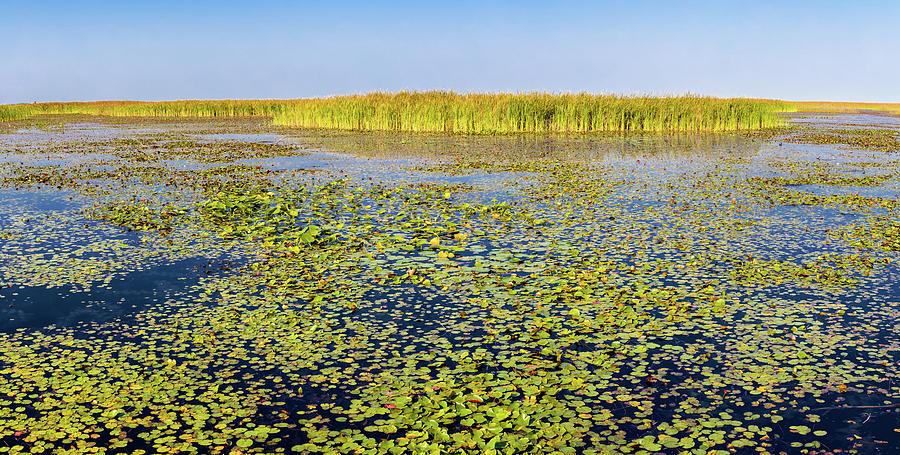 Horizontal Photograph - Marsh At Edge Of Lake Okeechobee by Panoramic Images