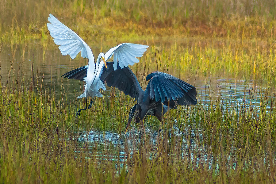 Great Egret Photograph - Marsh Dance Two by Charles Moore