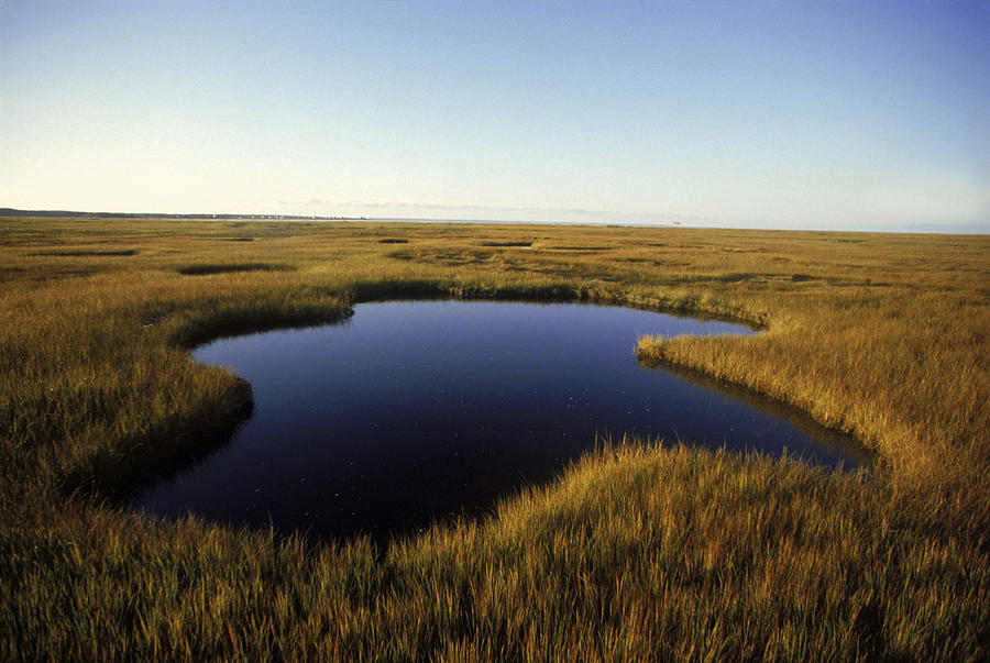 Abandoned Photograph - Marsh On Cape Cod by Jose Azel