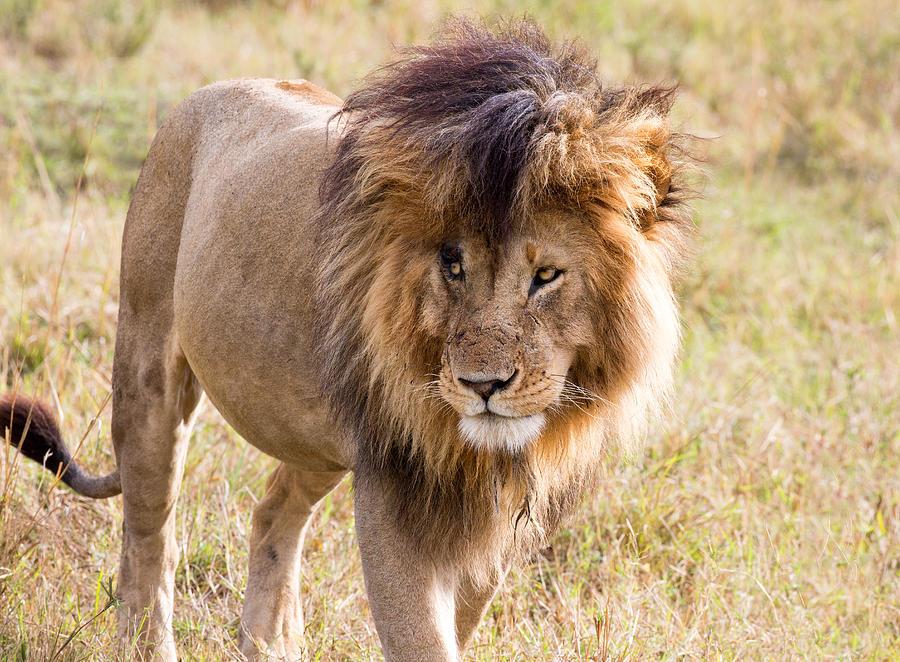 Lion Car Sales