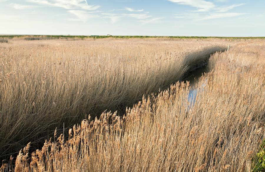Plant Photograph - Marshland, Uk by Science Photo Library