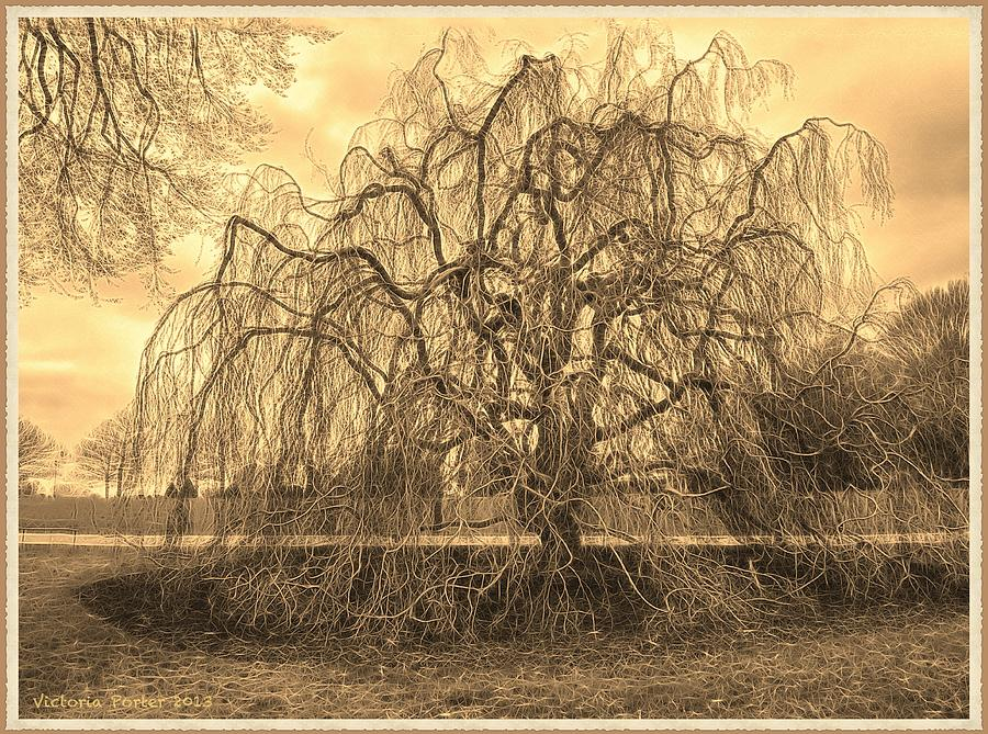 Marvelous Tree at Longwood Gardens by Victoria Porter