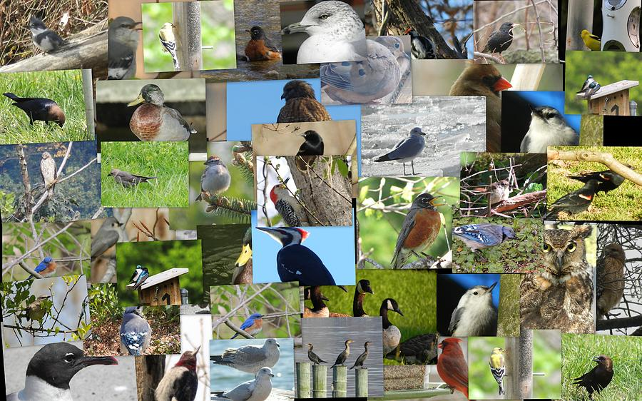 Maryland Birds Photograph by Tom Ernst
