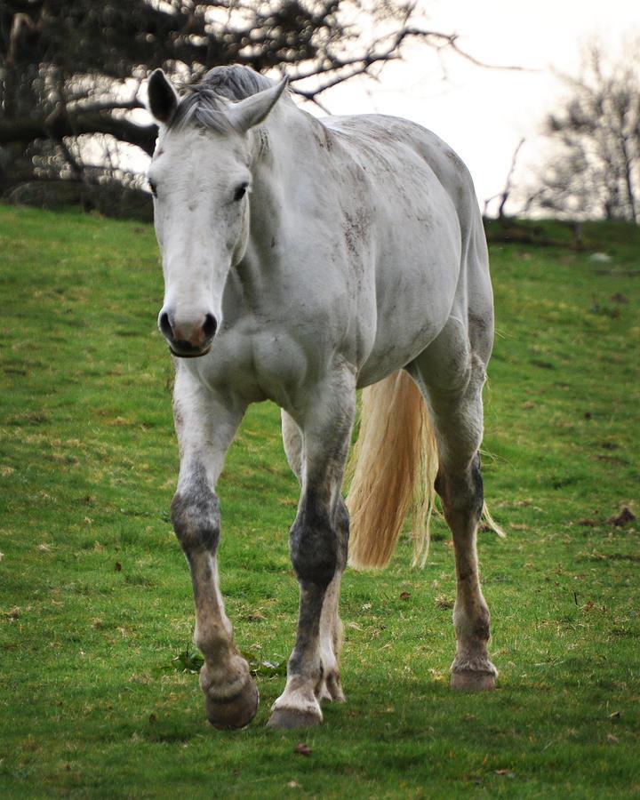 Horse Photograph - Marys Folly by Tara Hall