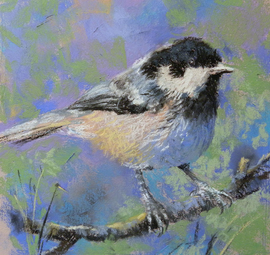 Coal Tit Painting - Mask Of Zorro by Jackie Simmonds