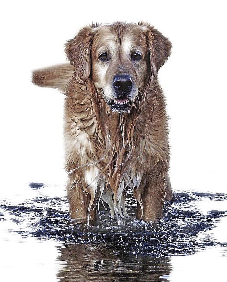 Dog Photograph - Master Of Wet Elements by Joachim G Pinkawa