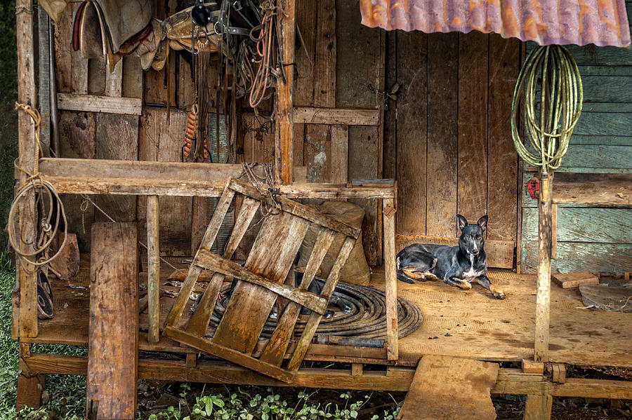 Dog Photograph - Masters Home by Nancy Strahinic