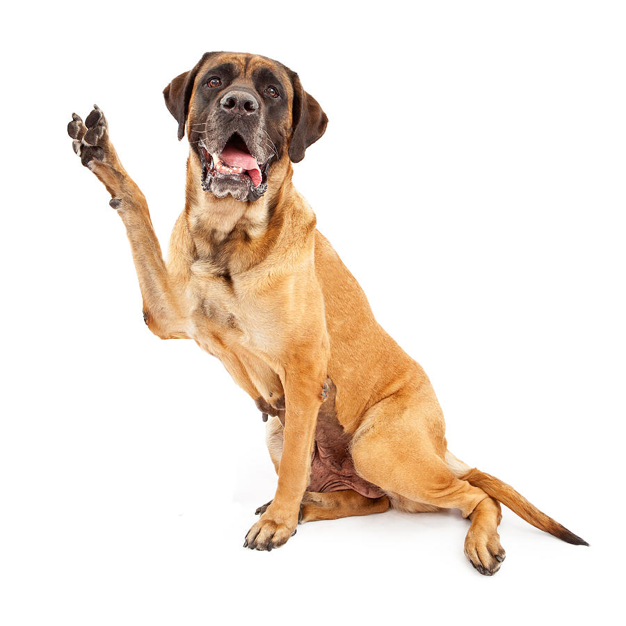 Dog Making A Peace Sign