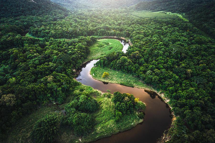 Mata Atlantica - Atlantic Forest in Brazil Photograph by FG Trade