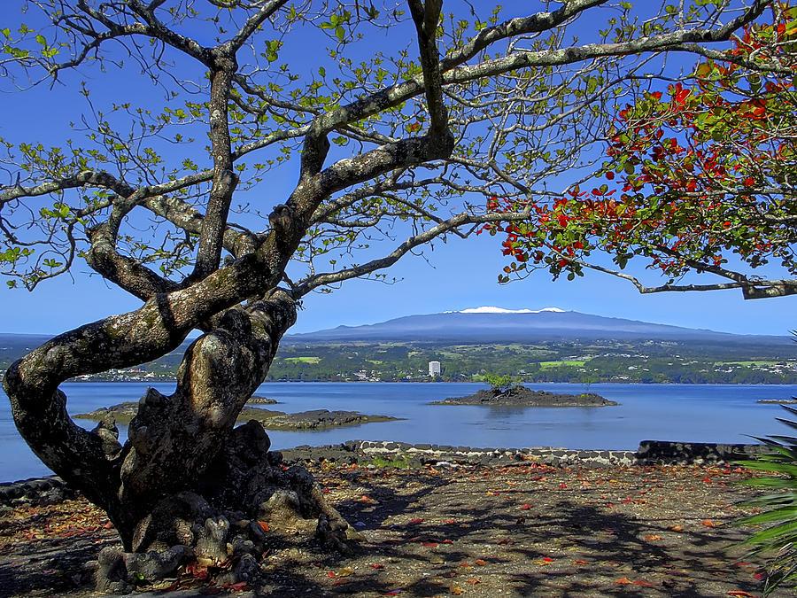 Mauna Kea Photograph - Mauna Kea Volcano Over Hilo Bay Hawaii by Daniel Hagerman