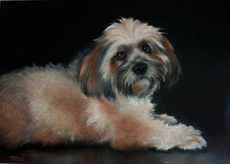 Dogs Drawing - Maxi by Cynthia House