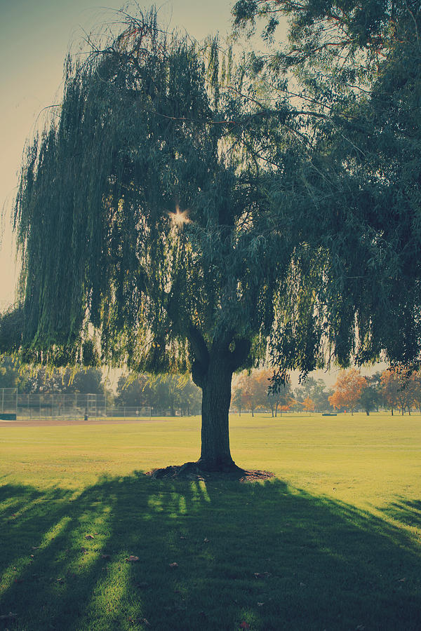 Trees Photograph - Maybe Well Find It Someday by Laurie Search