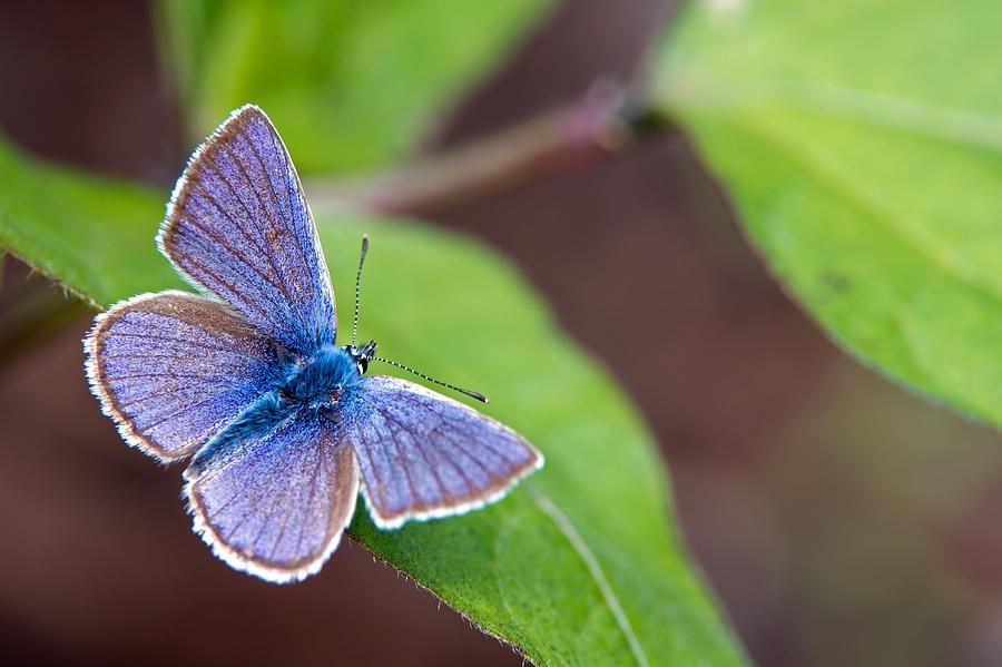 Mazarine Blue Photograph
