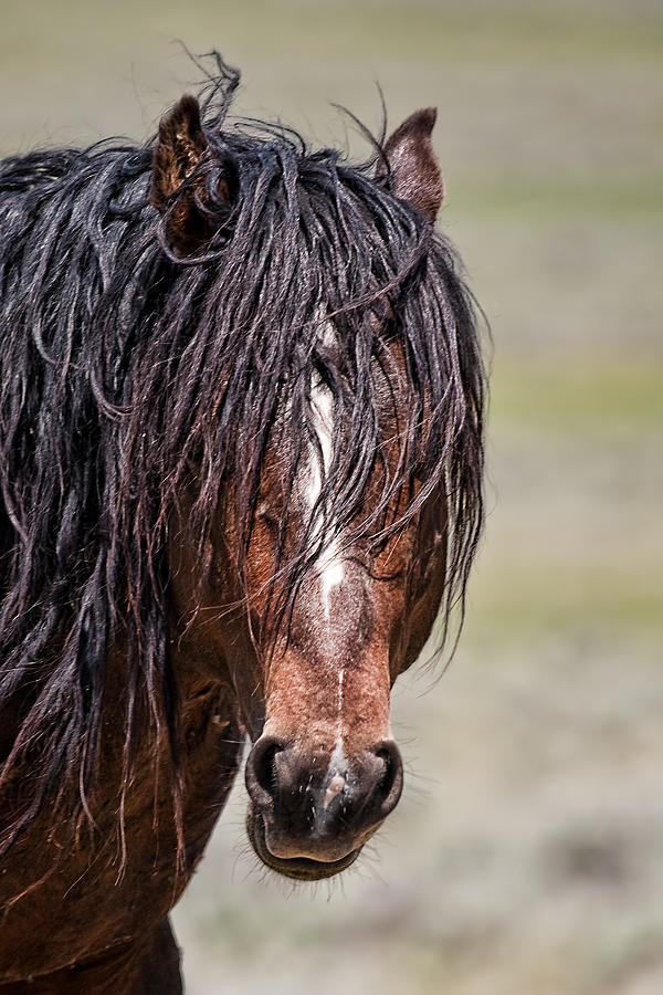 Cody Photograph - Mccullough Peaks Stallion by Jana Thompson