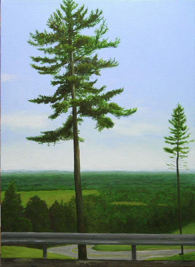 Pine Painting - Mcgregor Pine by Paul Chapman