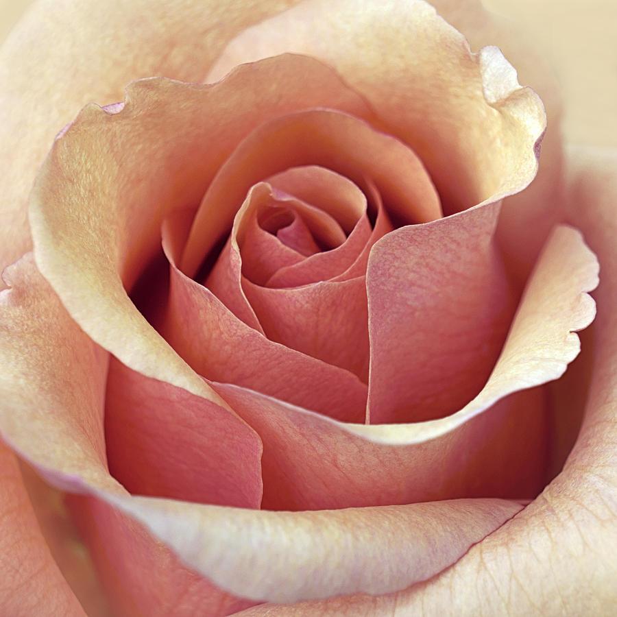 Floral Photograph - Mcintosh by Darlene Kwiatkowski