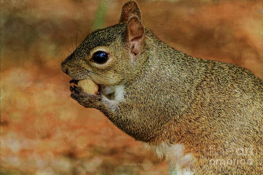 Squirrel Photograph - Me And My Peanut by Deborah Benoit