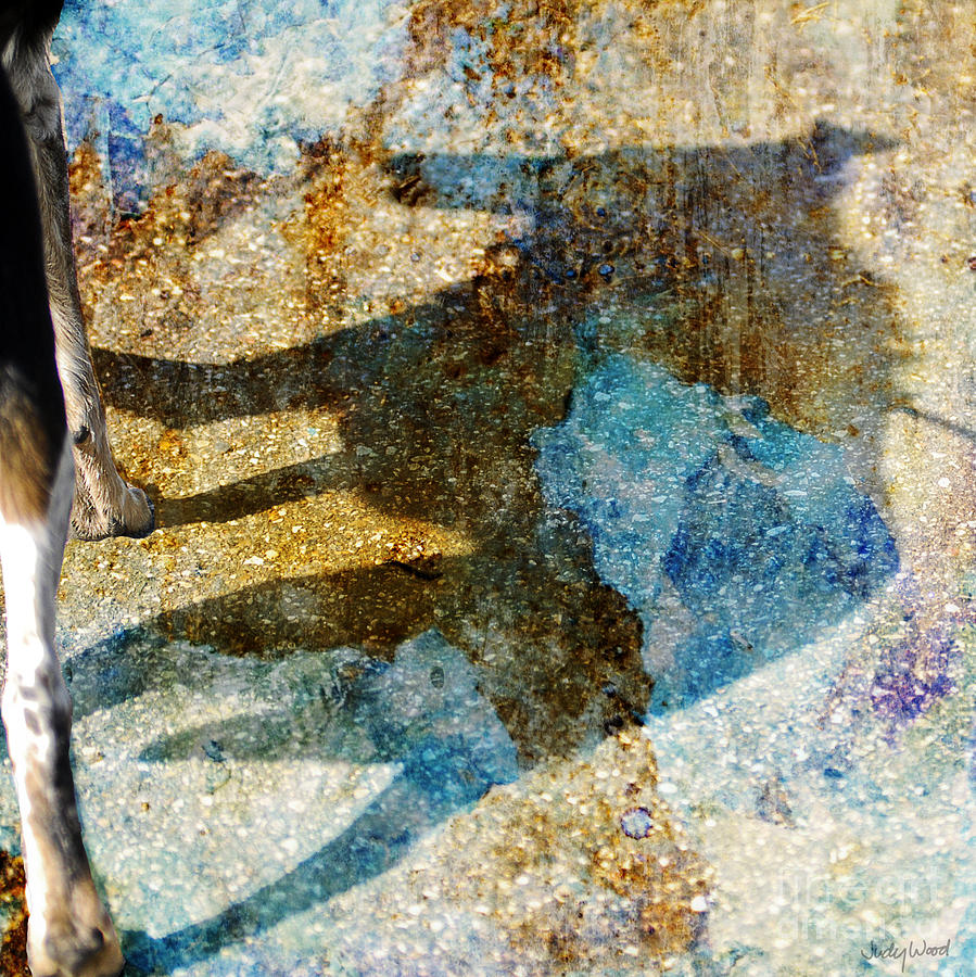 Dog Digital Art - Me And My Shadow by Judy Wood