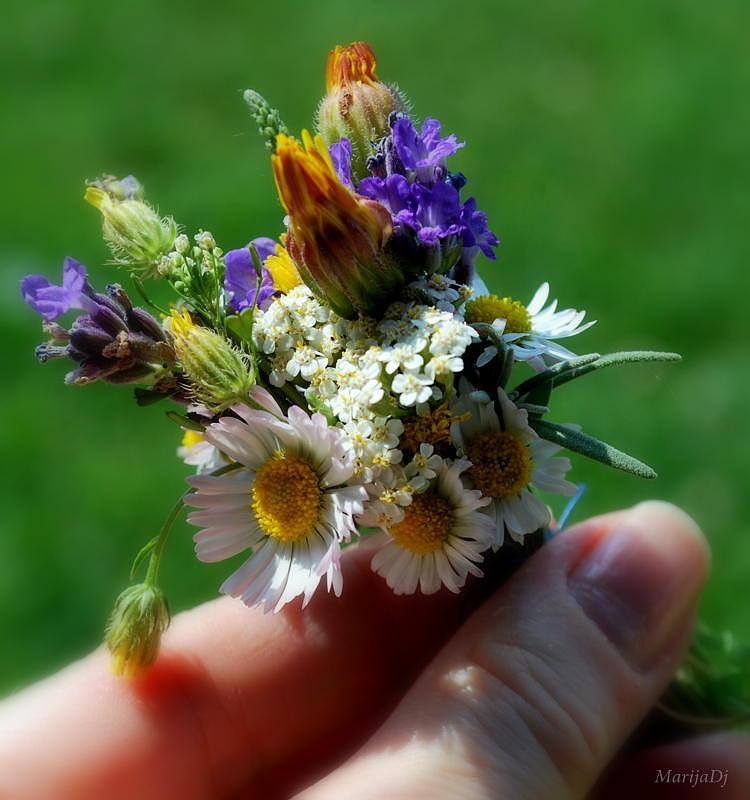 Flowers Photograph - Meadow Bouquet by Marija Djedovic