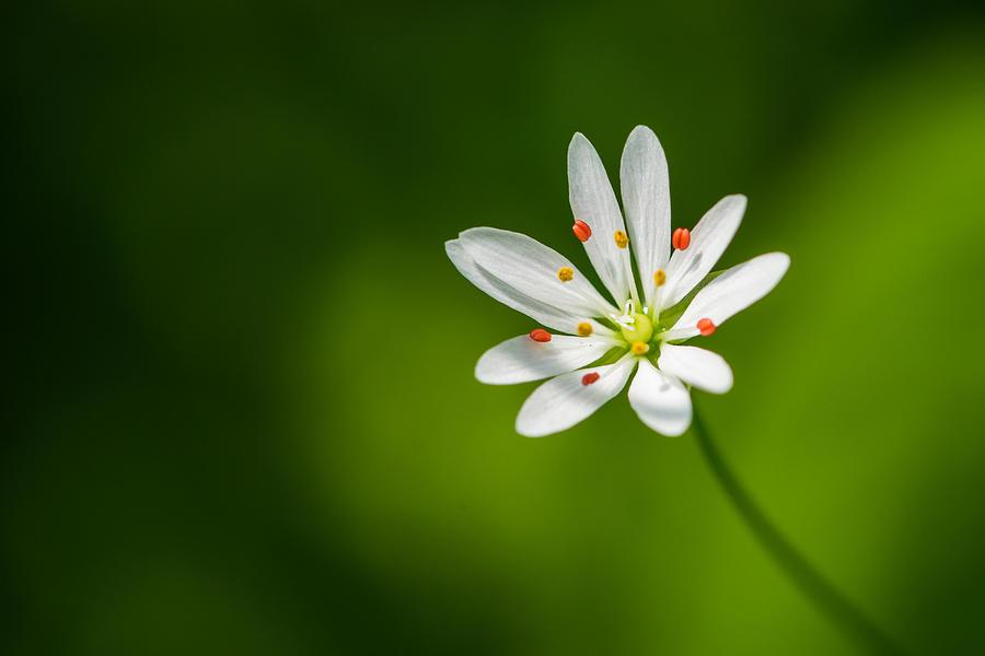 Flower Photograph - Meadow Candy - Featured 3 by Alexander Senin