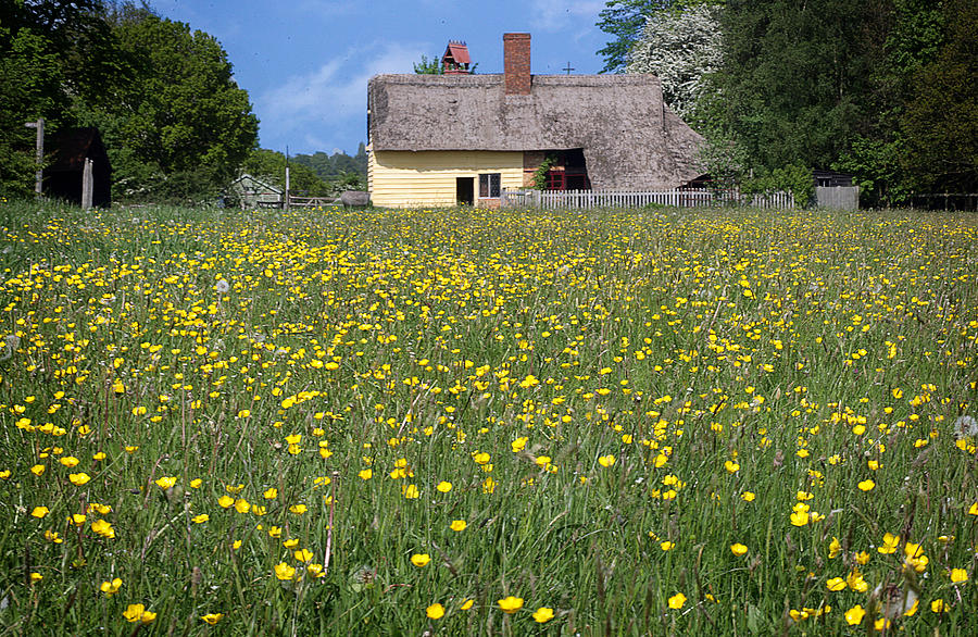 Flowers Photograph - Meadow Cottage by Stephen Norris