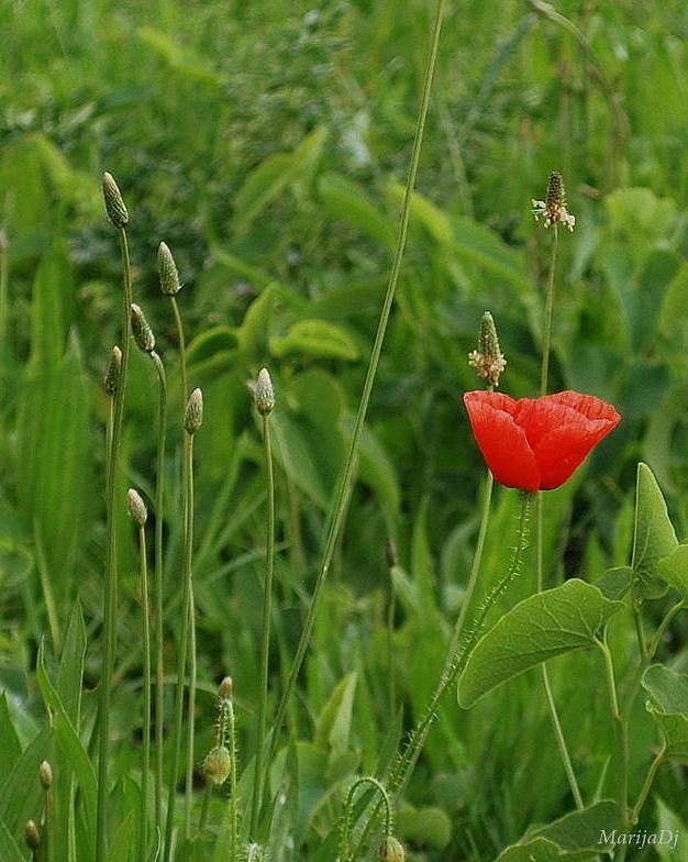Flowers Photograph - Meadow Ornament by Marija Djedovic