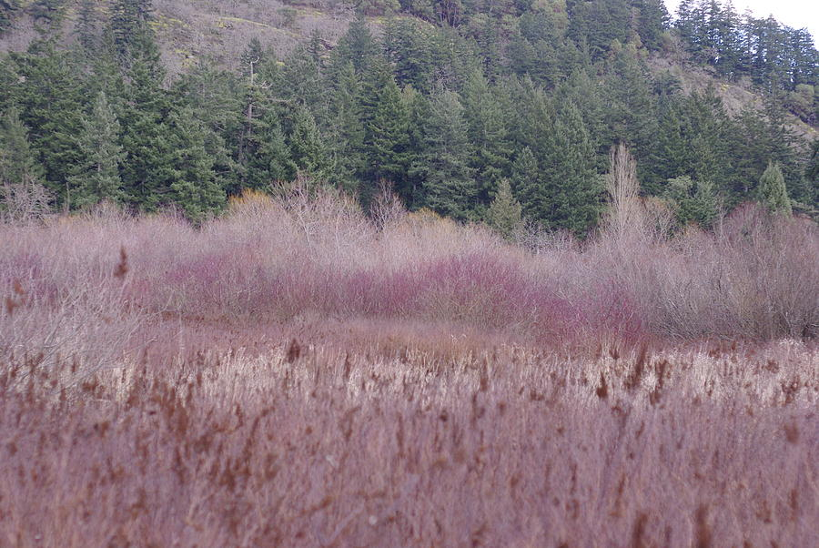 Wild Grasses Photograph - Meadow View by Marilyn Wilson