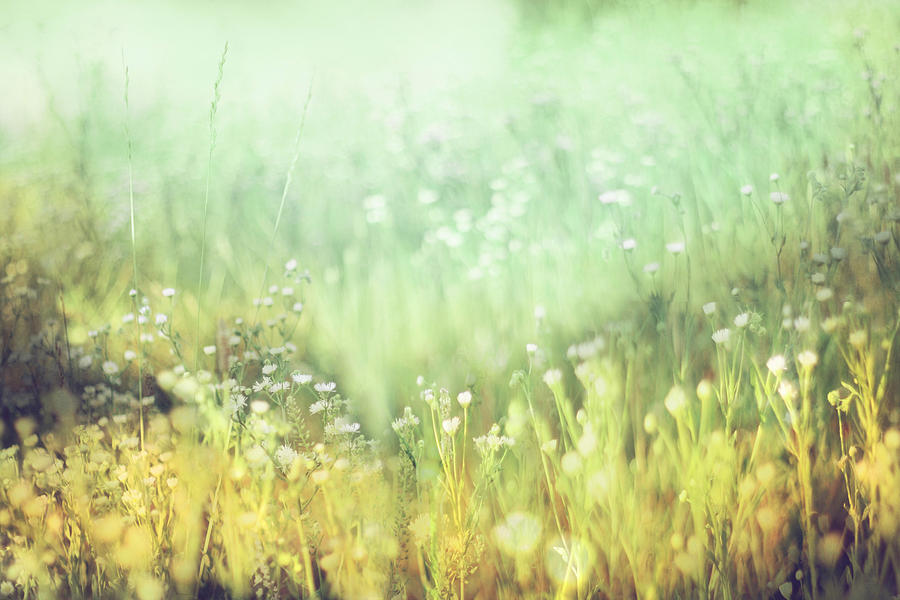 Meadow Photograph - Meadowland by Amy Tyler