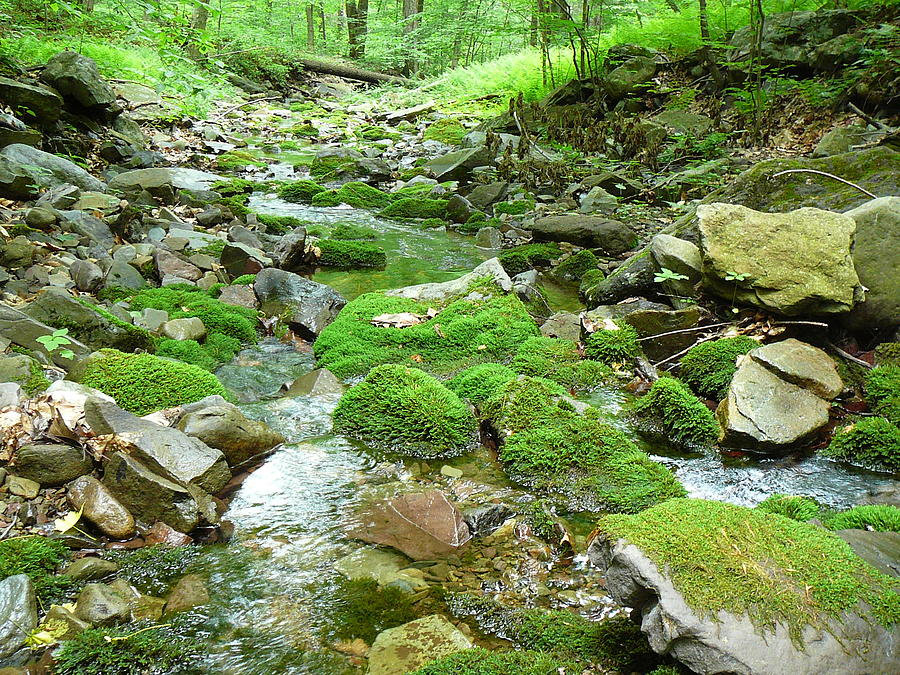 Meandering Stream Photograph