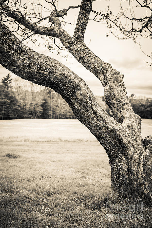 Cornish Photograph - Meet Me Under The Old Apple Tree by Edward Fielding