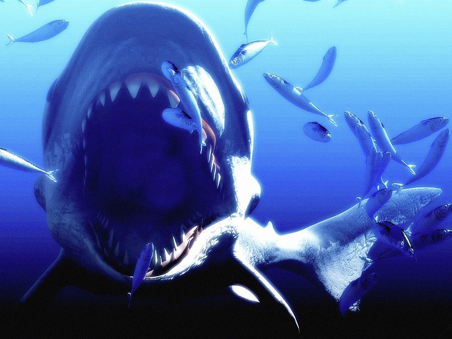 b55fc0ce2d Megalodon Prehistoric Shark Photograph by Christian Darkin